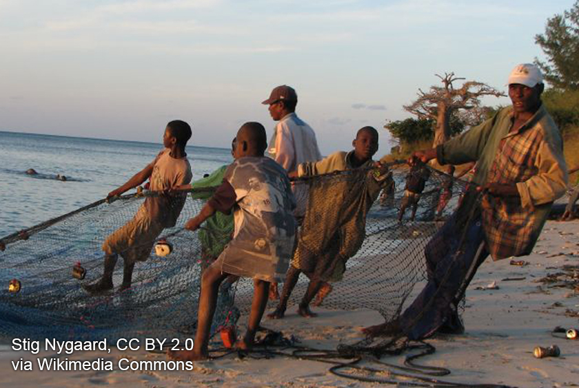 a group of men pull a fishing net. Photo by Stig Nygaard, CC BY 2.0 via Wikimedia Commons